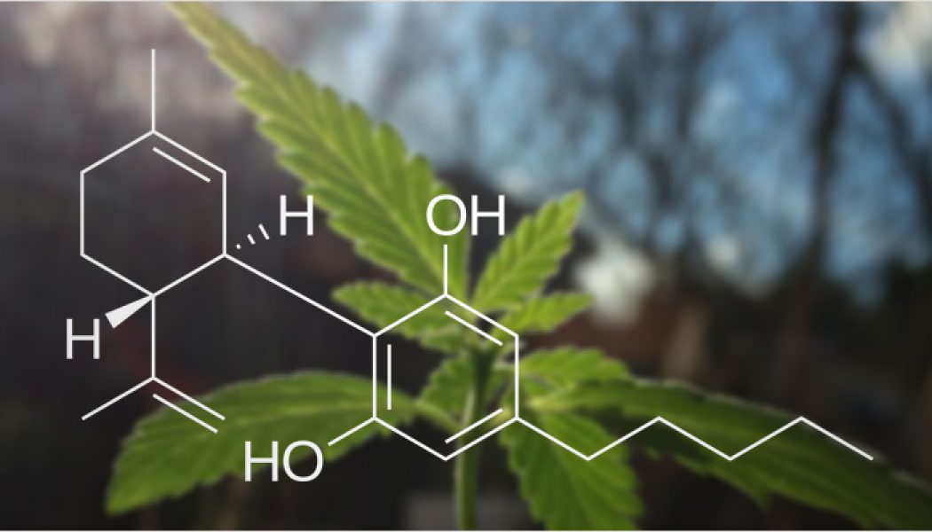 Everything You Need to Know About Cannabidiol