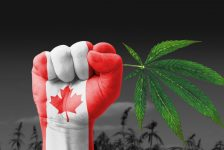 A Look at Future Plans for Cannabis in Canada