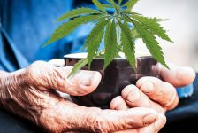 Casting Aside the Stereotypes in Seniors Medicating with CBD & MMJ