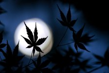 Best Cannabis Strains for a Quiet Night In
