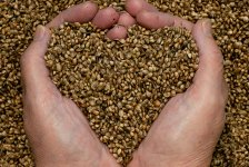 CBD Oil VS Hemp Seed Oil: What's the Difference?