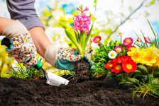 Top 6 Gardening Tips for Seniors