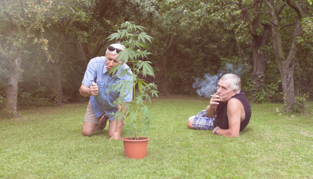 How to Safely Use Cannabis Outdoors (for Seniors)