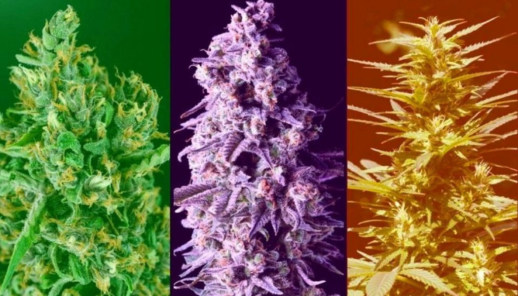 13 Must-Know Facts for Cannabis Beginners
