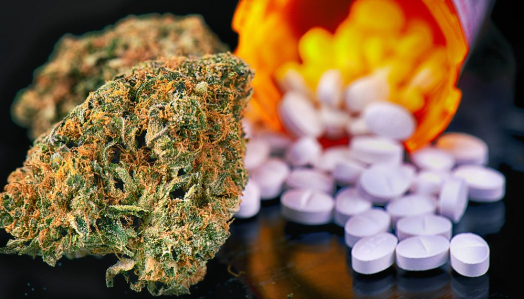 Cannabis and Drug Interactions