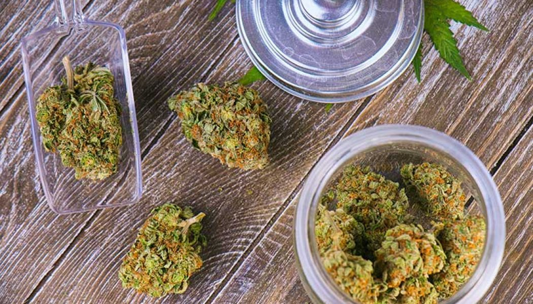 Study Finds Hybrid Strains Are Best For Chronic Pain Patients