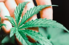 As Trump Inks Hemp Legalization, New Law Portends Major Changes For Cannabis Industry
