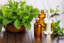 This is Why Peppermint CBD Tinctures Are So Popular in The U.S.