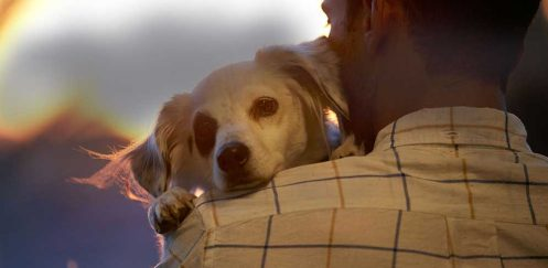 CBD Clinical Trial Results on Seizures in Dogs: 'Promising, Encouraging, Exciting'