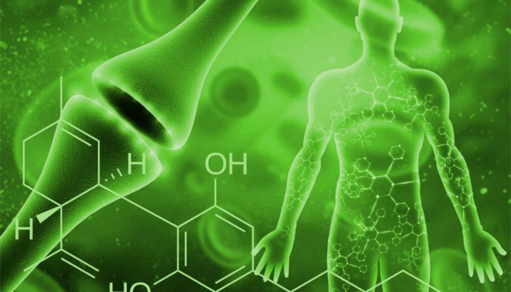 Everything You Need To Know About Your Endocannabinoid System