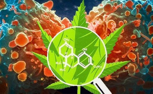 Harvard Study Reveals Cannabis Compound's Potential in Cancer Therapy