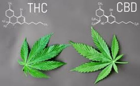 What is CBD: A Beginners Guide
